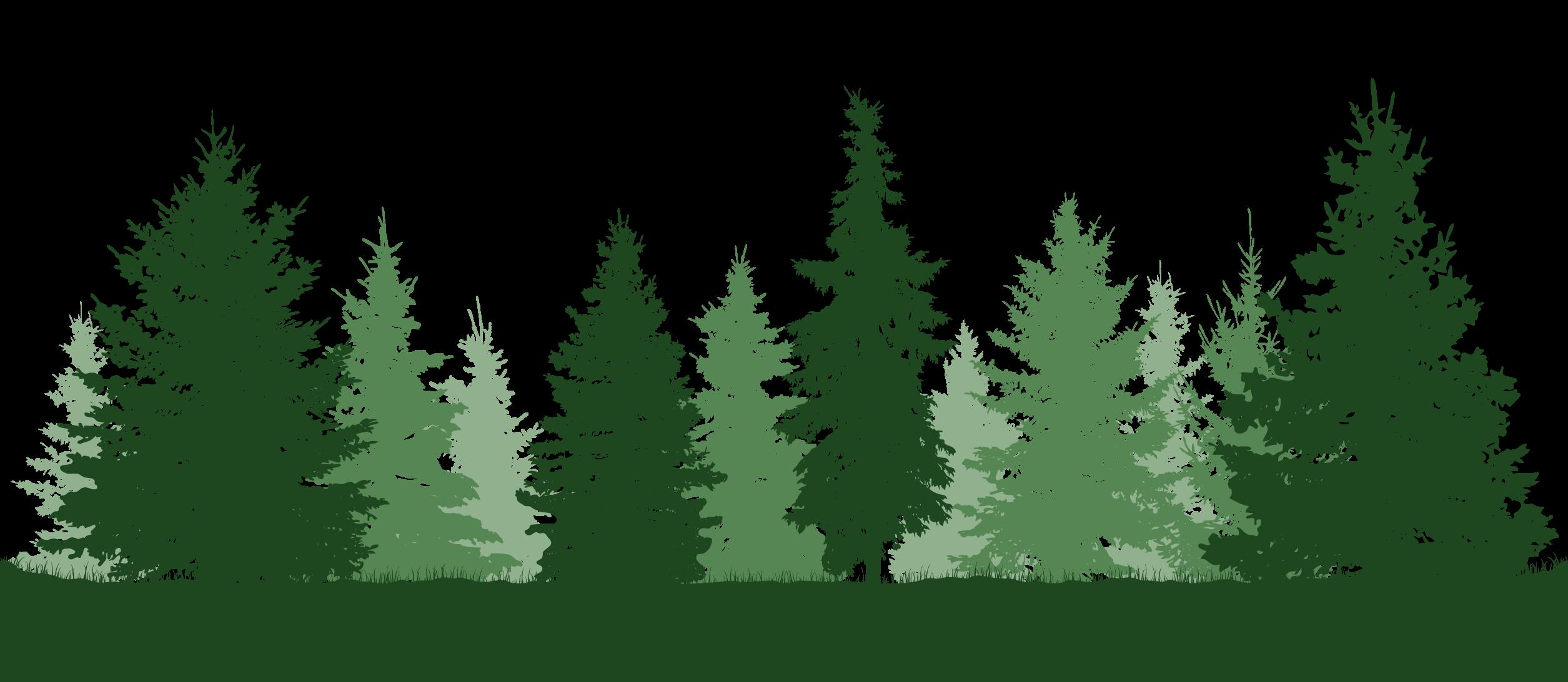 woods001